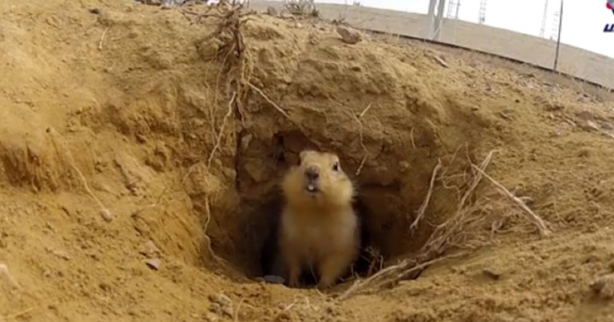 A gopher in Kazakhstan living under a rocket launch pad becomes an internet sensation.</p>