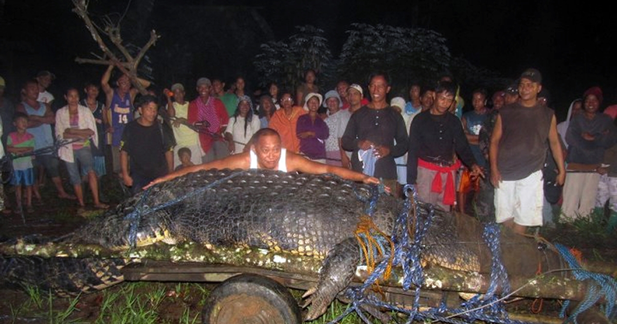 This photo taken on September 4, 2011 shows villagers looking at the 21-foot (6.4 meter) saltwater crocodile caught in the town of Bunawan, Agusan del Sur province on the southern Philippine island of Mindanao. The giant saltwater crocodile weighing more than a tonne may have eaten a farmer who went missing in July, along with several water buffaloes in the southern town of Bunawan, crocodile hunter Rollie Sumiller said.</p>