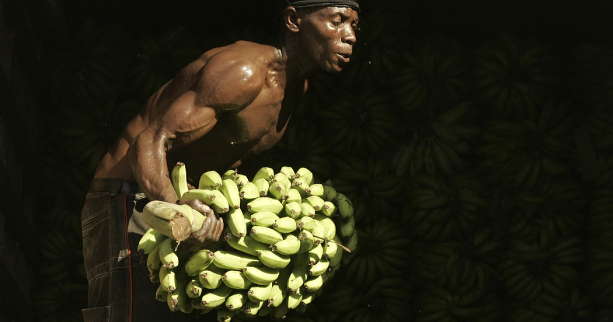 A Haitian worker carries bananas at the frontier line between Malpase in Haiti and Jimani in Dominican Republic, April 10, 2007.</p>