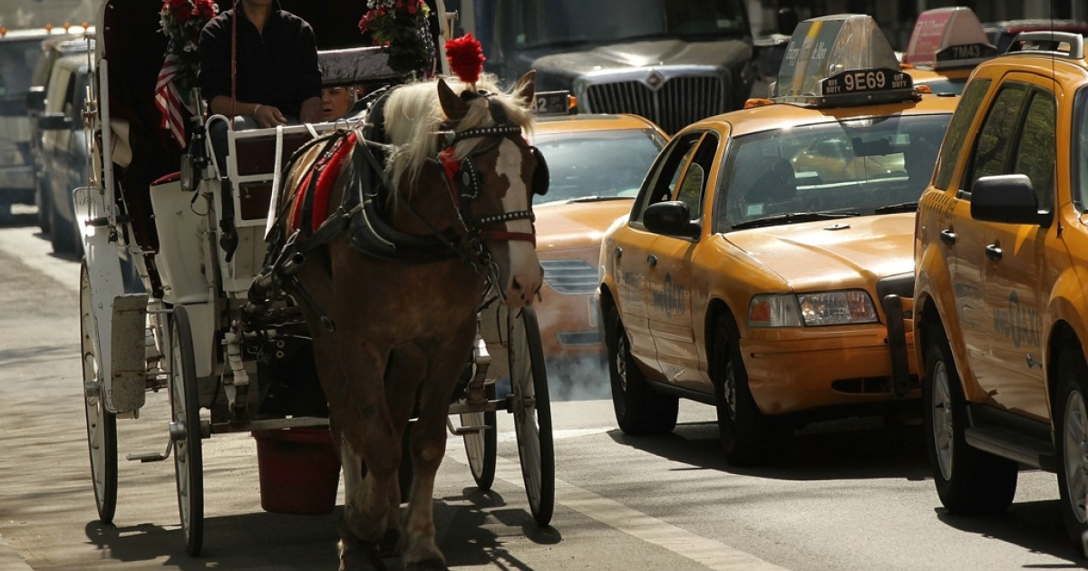 The accident has reignited the debate about the treatment of horses in New York's Central Park.</p>