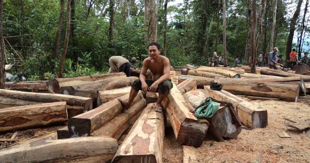 Cambodian workers collect and process piles of illegally logged luxury wood in the forest in Oddar Meanchey province.</p>