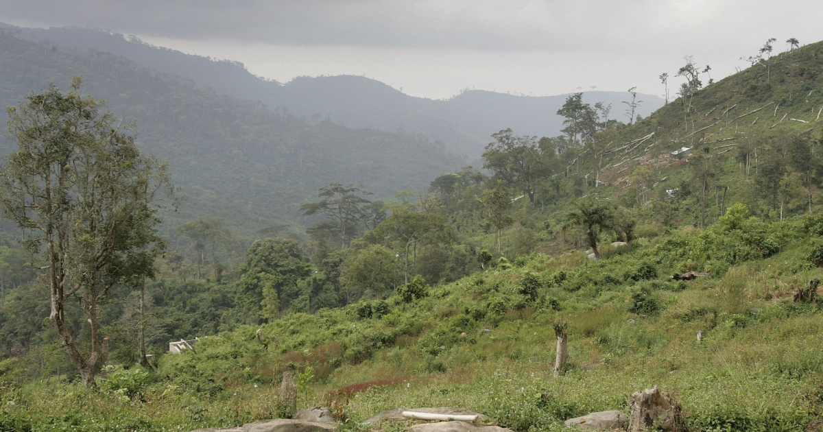 Felled trees lie on the mountainside just outside Freetown, Sierra Leone on November 27, 2006. Deforestation has become a huge problem in Africa, with some reports saying that the continent is loosing forests four times faster than any other part of the world.</p>