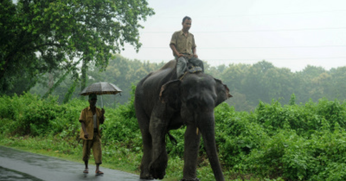 An Indian forest guard rides an on elephant as he heads for a patrol in Marionbarie forest of Kurseong sub-division area, some 30 kms from Siliguri, on July 31, 2011. Indian forest officials are on the search for an injured wild elephant in the India-Nepal border area after its herd was attacked by villagers July 29 in Nepal's Jhapa district, some 9 kilometres from the border.</p>