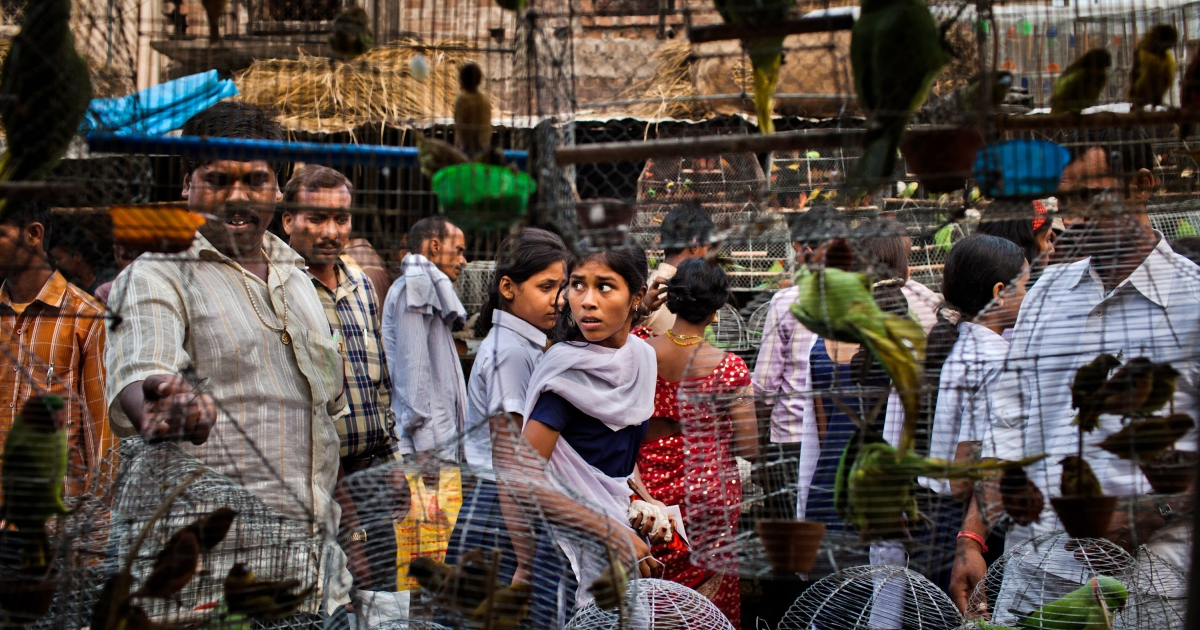 People walk past cages with birds for sale at a market during the Sonepur Mela Sonepur near Patna, India. Standard and Poor indicated that India may lose its investment-grade rating due to slow growth rates and political deadlocks concerning economic policy.</p>