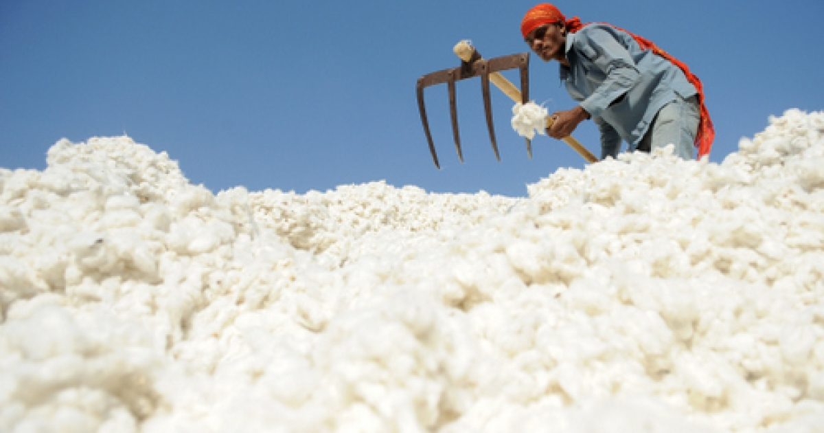 This December 16, 2011 file photograph shows an Indian worker as he sorts cotton, one of India's principal exports.</p>