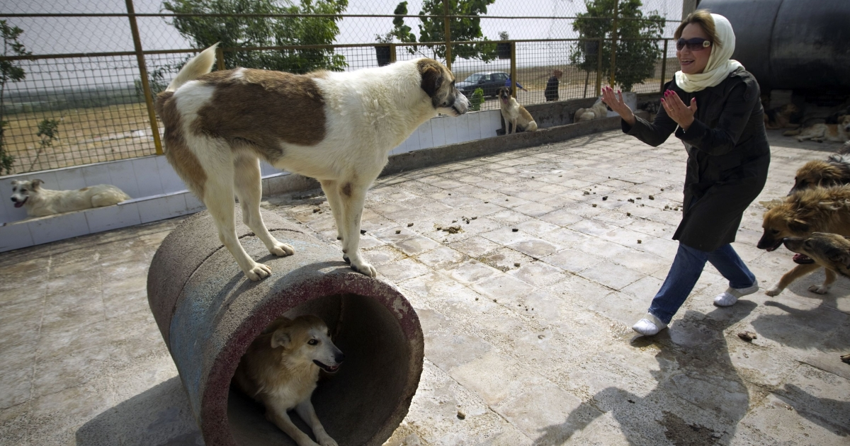 Iranian dog lover Neda plays with a dog at the Vafa animal shelter in the town of Hashtgerd, about 40 miles west of the capital Tehran on June 30, 2011.</p>