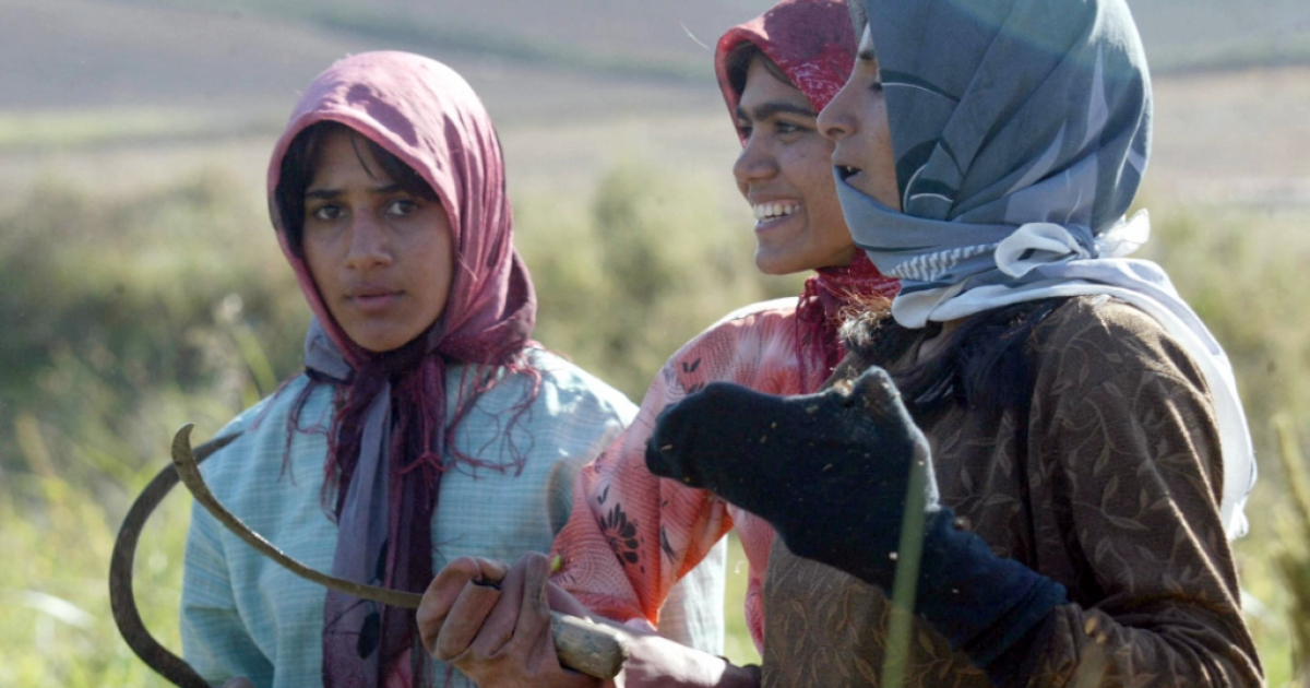 Iran's agriculture sector has been hit with poor harvest year. Here, Iranian women hold sickles at a farm in the southwest Golestan province, an intensively cultivated farming region.</p>