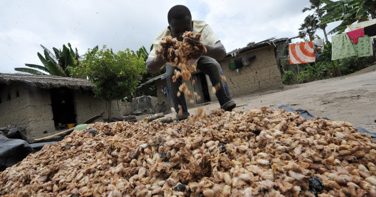 A farmer moves cocoa beans on July 13, 2011 in a cocoa cooperative in Gonate, Ivory Coast.</p>