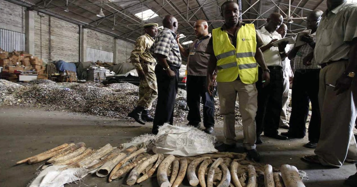 On Dec. 22, 2011, officers from Kenya's Revenue Authority and Wildlife Services stand over elephant tusks seized at the main port of Mombasa. The illegal trade in ivory is fueled by demand in Asia and the Middle East where elephant tusks and rhinoceros horns are used to make ornaments and traditional medicines.</p>