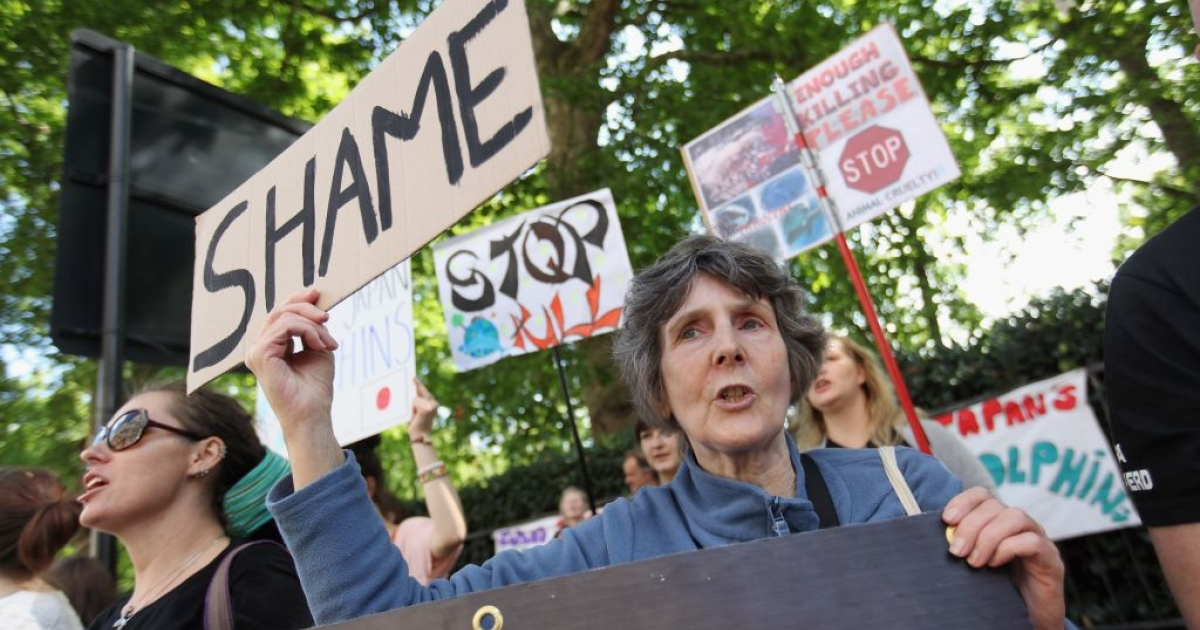 Protestors denounce Taiji's annual dolphin hunt at a protest outside the Japanese embassy in London on Sept. 1 2011. Now the town is considering plans for a marine safari park.</p>