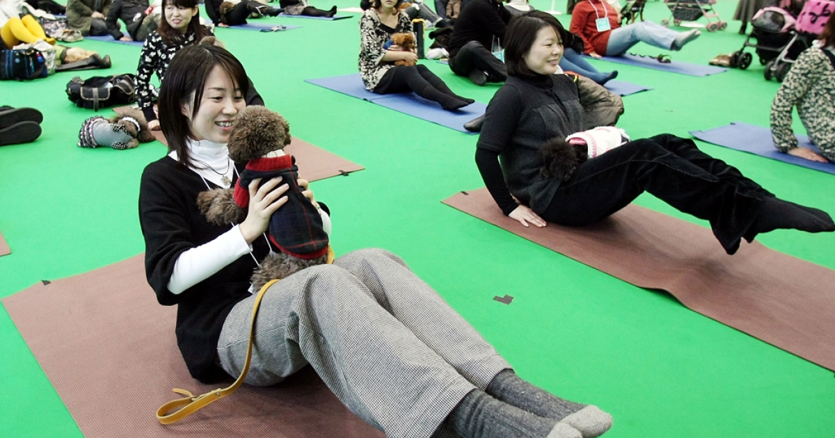 Owners and their dogs experience Dog Yoga at the New Year Dog Party held at Tokyo Big Sight on Jan. 12, 2008 in Tokyo, Japan. Dog yoga has recently caught on in Hong Kong.</p>