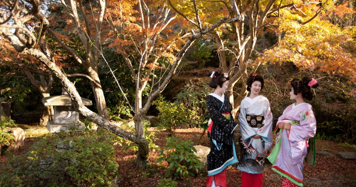 Three trainee geisha, known as 'maiko' until they make their debut appearance, take a walk in Ryosen-ji shrine in Shimoda, Japan, Dec. 14, 2011. From left to right: Rinka (black kimono), Awagiku (white/silver) and Iroha (pink).</p>
