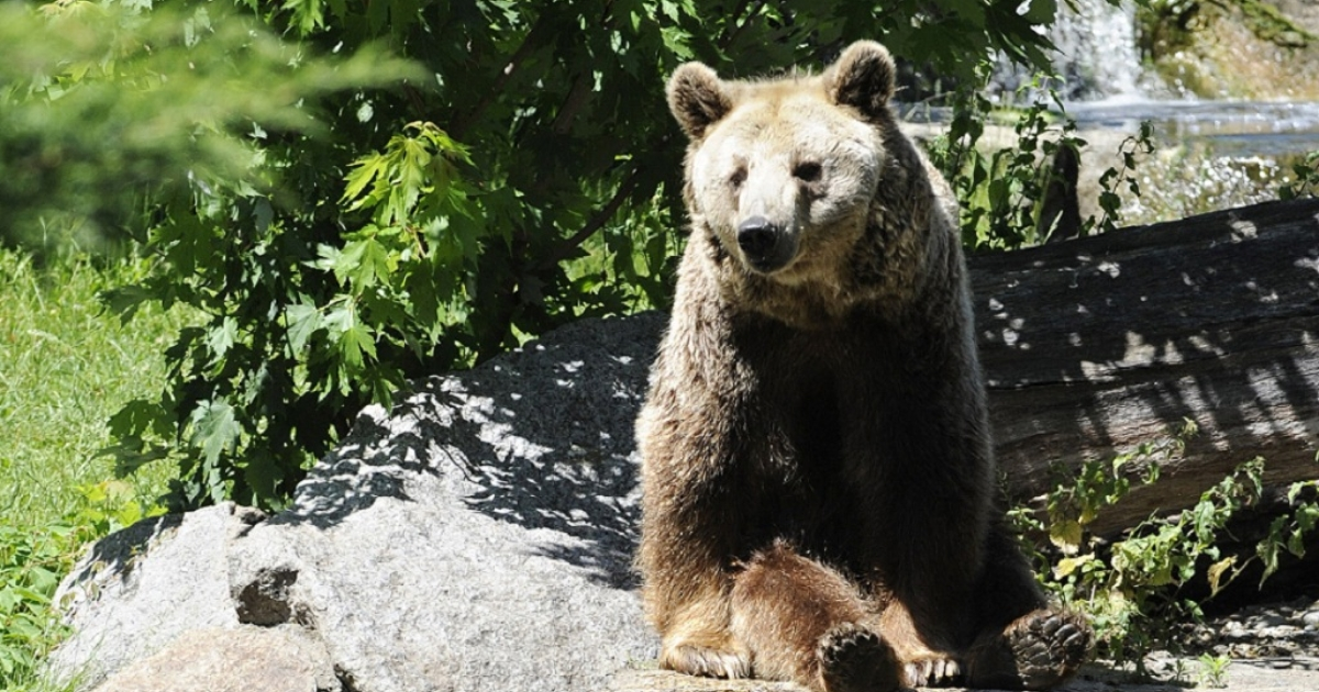 Up to 38 mostly brown bears have escaped from their enclosure at the Hachimantai bear park in Akita prefecture, Japan, killing two staff members and forcing locals to stay indoors.</p>