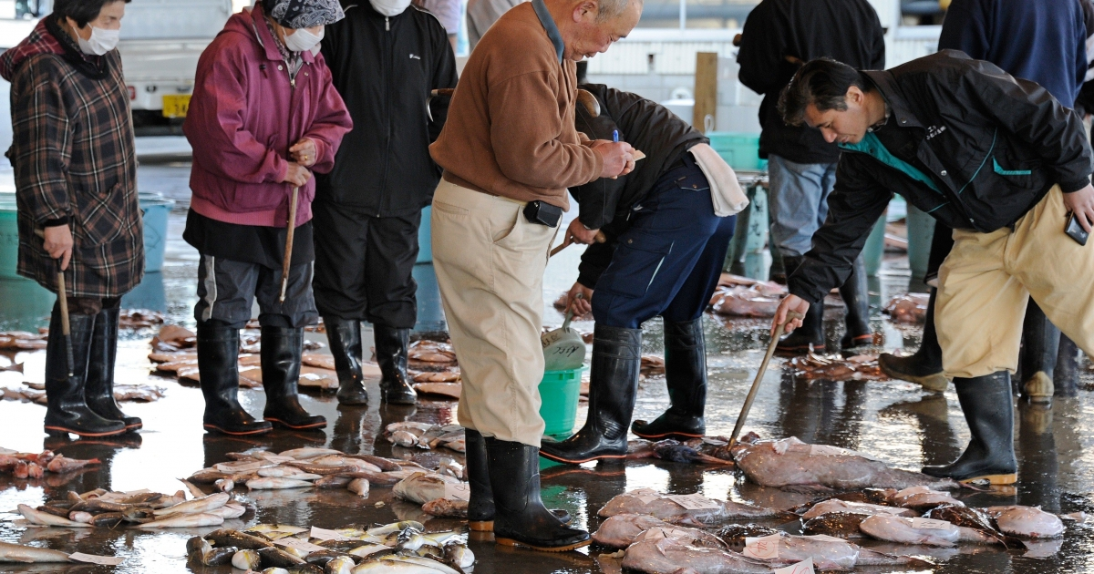 Brokers check fish at the Hirakata Fish Market in Kitaibaraki, Ibaraki Prefecture, trading for the first time since the March 11 earthquake and tsunami disaster, on April 5, 2011. The health ministry said that iodine-131 at a level of 4,080 becquerels per kilogram had been detected in a small fish called konago, or sand lance, caught off Ibaraki prefecture, south of the plant.</p>
