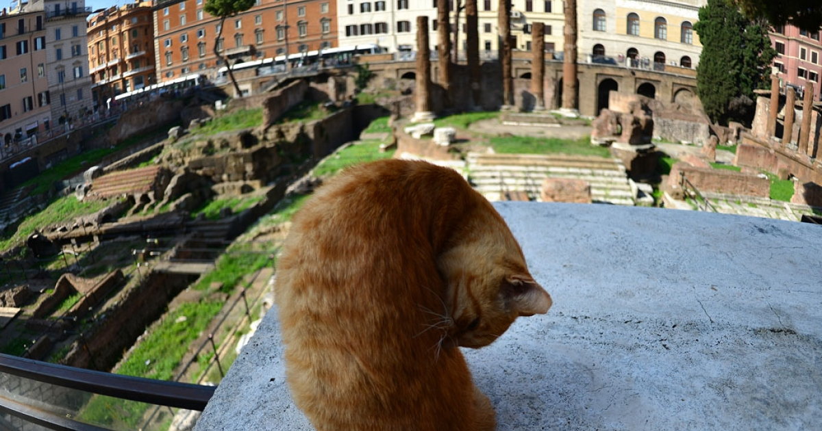 A cat sits at the Largo di Torre Argentina on October 11, 2012 in Rome, the exact spot among ancient ruins where Roman general Julius Caesar was assassinated on March 15, 44 BC, researchers say.</p>