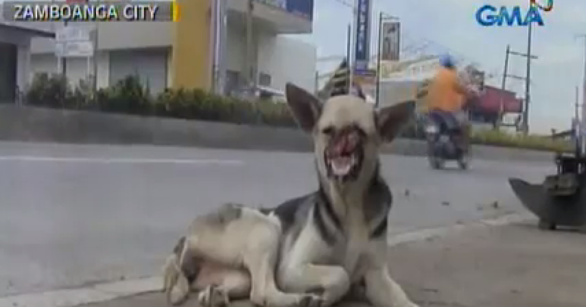 Kabang, the dog hailed as a hero in the Philippines, reportedly lost half her face while saving two girls from a speeding motorcycle.</p>