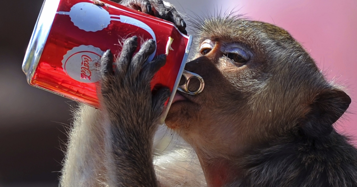 A Kazakhstan zoo fed its monkeys red wine to keep them warm during extremely cold nights.</p>