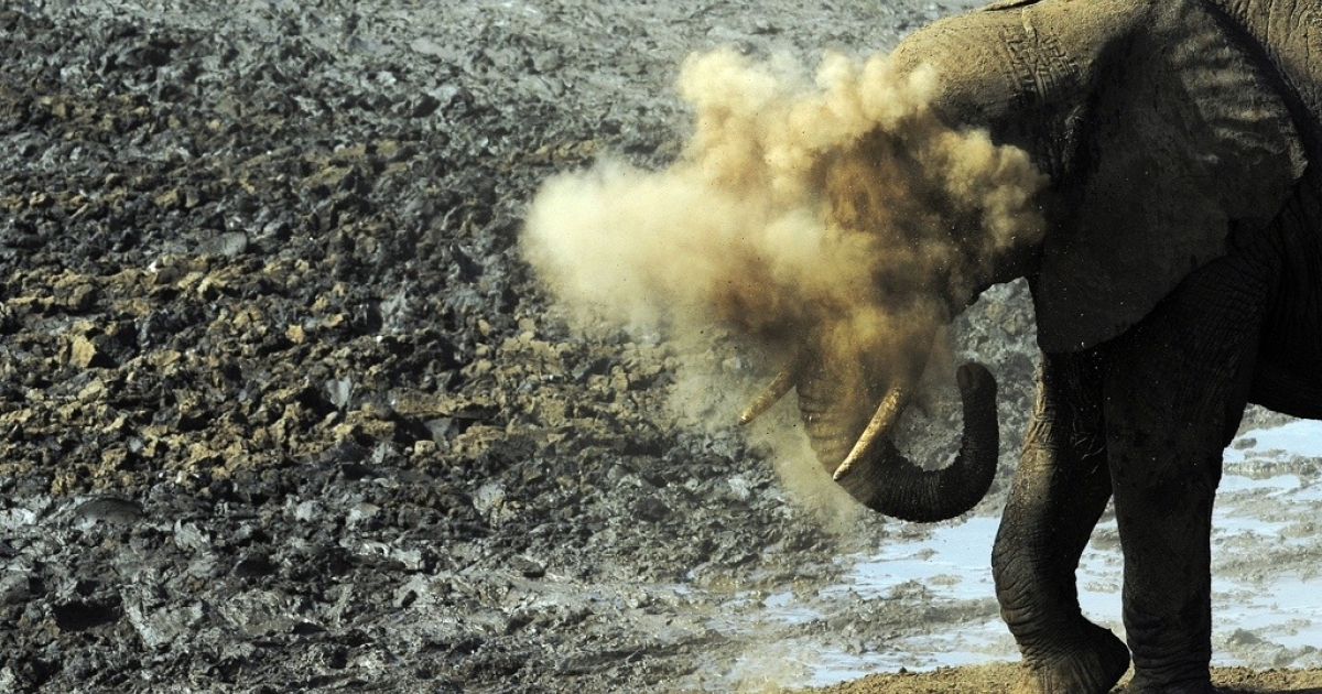 An elephant takes a dust-bath in Tsavo West National Park, located in southern Kenya. A slowdown in the increase of Kenya's elephant numbers is raising fears that hard-fought gains in saving the animals may be reversed.</p>