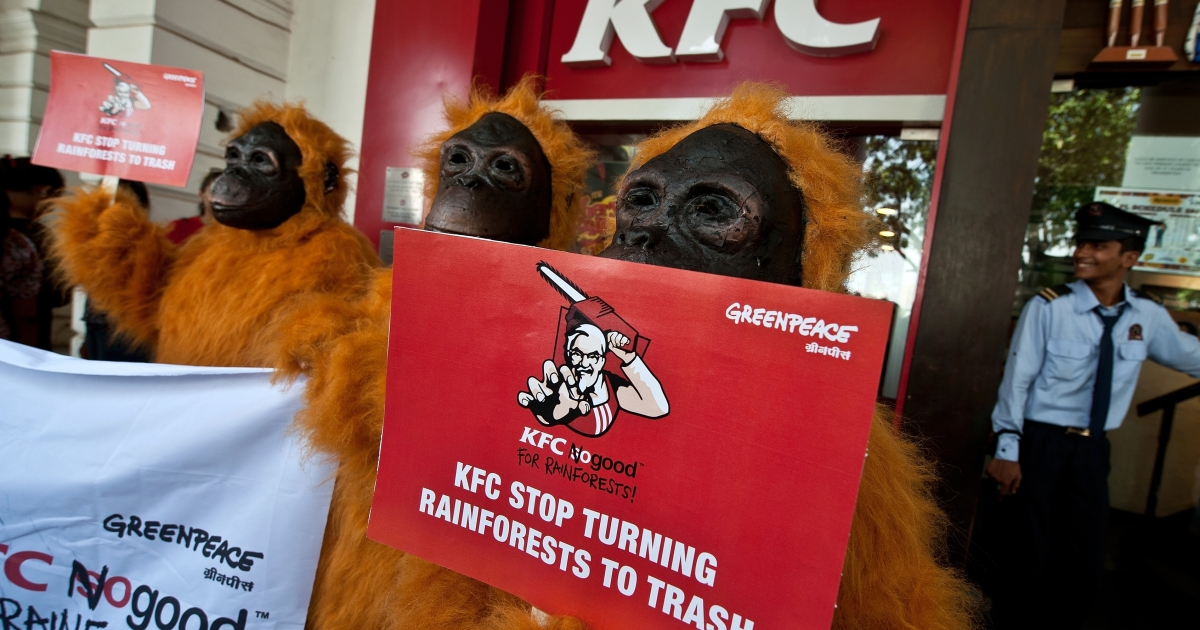 Greenpeace activists dressed as Orangutans take part in a protest outside a KFC outlet in New Delhi on May 24, 2012. Greenpeace activists staged a protest dressed as Orangutans, urging Kentucky Fried Chicken (KFC) to stop destroying rainforests - habitat for endangered species like orangutans and the Sumatran tiger.</p>
