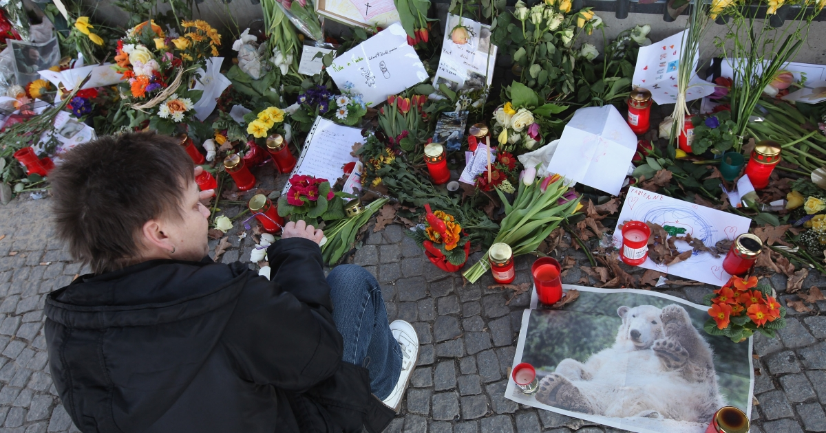 A woman wipes away a tear as she kneels next to a newspaper photograph of polar bear Knut among candles and flowers left by mourners at the gate of the Berlin Zoo on March 22, 2011 in Berlin, Germany. Knut died unexpectedly at the age of four on March 19, and zoo officials have announced that initial autopsy results point to some kind of brain trauma as the cause of death. Knut won worldwide fame following his birth at the zoo and became among the city's most popular tourist attractions.</p>