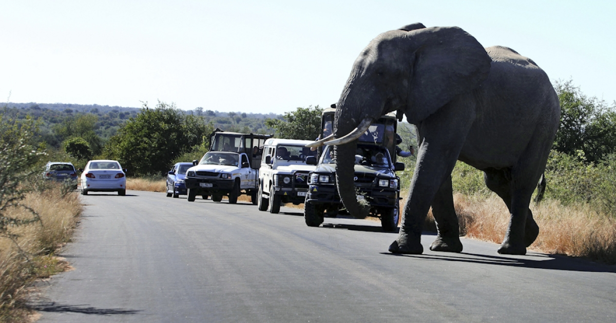 An elephant crosses the road at South Africa's Kruger National Park, one of Africa's top safari destinations. A number of roads and entrance gates at the park were closed Jan. 18, 2012, because of flooding that also caused the evacuation of a tourist lodge.</p>