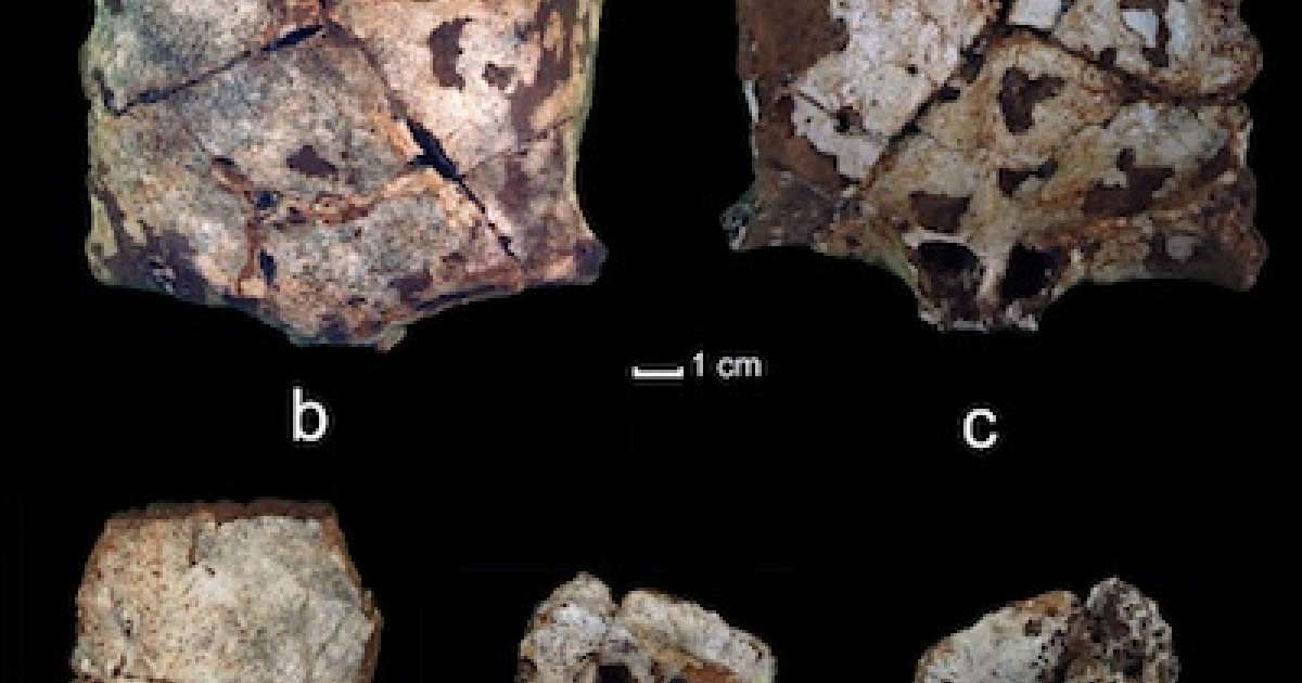 A 63,000-year-old skull, discovered by University of Illinois researchers in Laos, offers some of the earliest evidence yet of ancient human migration through Southeast Asia.</p>