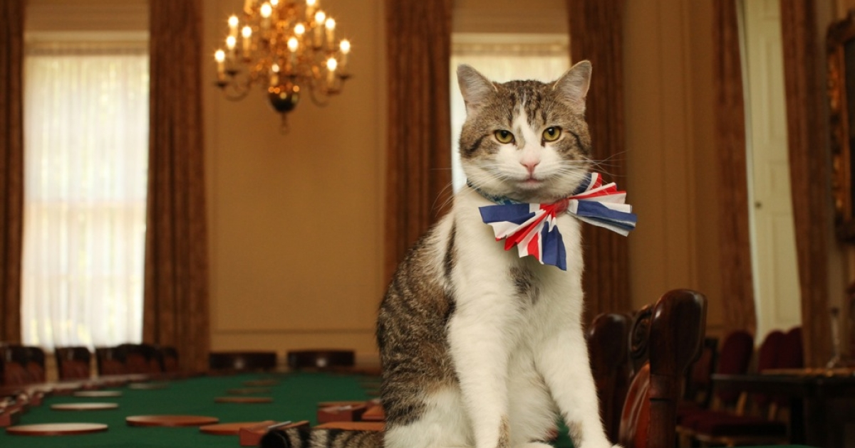 Larry the cat has gone from life on the streets to a high-powered job with the British prime minister - but it seems he's not doing his duties.</p>