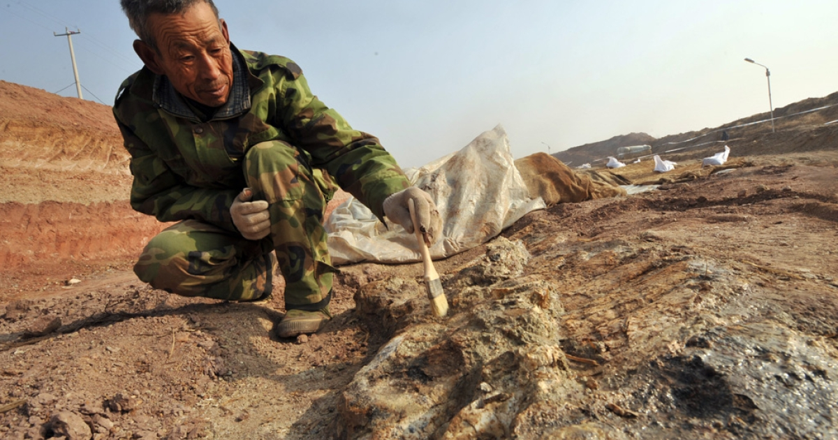 This photo taken on Nov. 30, 2009 shows a Chinese archeologist uncovering dinosaur fossils at a site in Zhucheng, known as
