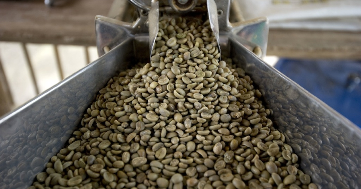 Picture of coffee beans in a thresher at the Hacienda Villa Martha in the municipality of La Gloria, department of Risaralda, Colombia, on August 12, 2011.</p>