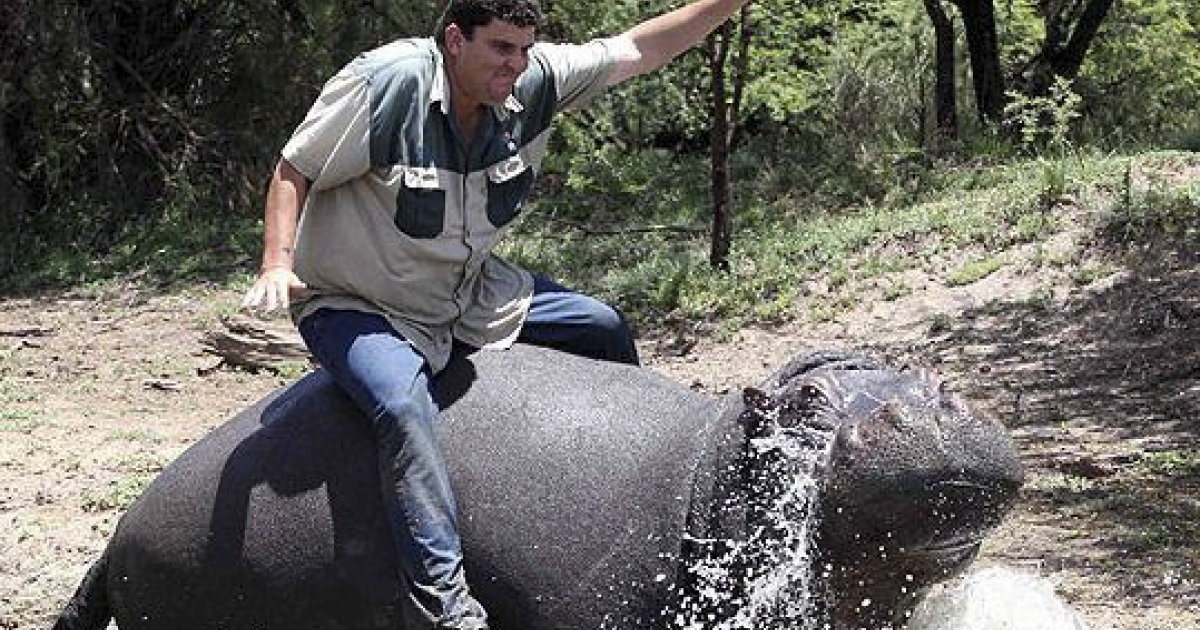 Marius Els rides his pet hippo, Humphrey. The hippo killed Els on November 12, 2011 in a dam at his farm in the Free State, South Africa.</p>