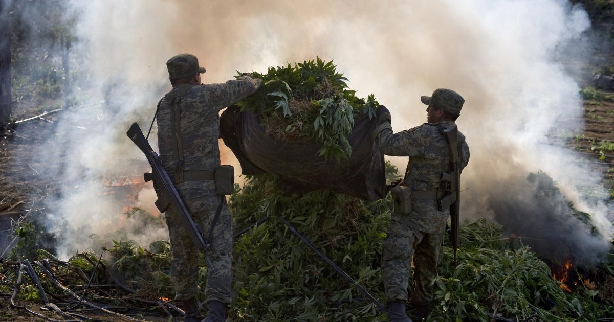 Mexican soldiers burn marijuana plants today at a field, in Los Algodones community, Culiacan, Sinaloa state, Mexico. Soldiers found a marijuana field and incinerated the drug as part of the Culiacan-Navolato operation.</p>