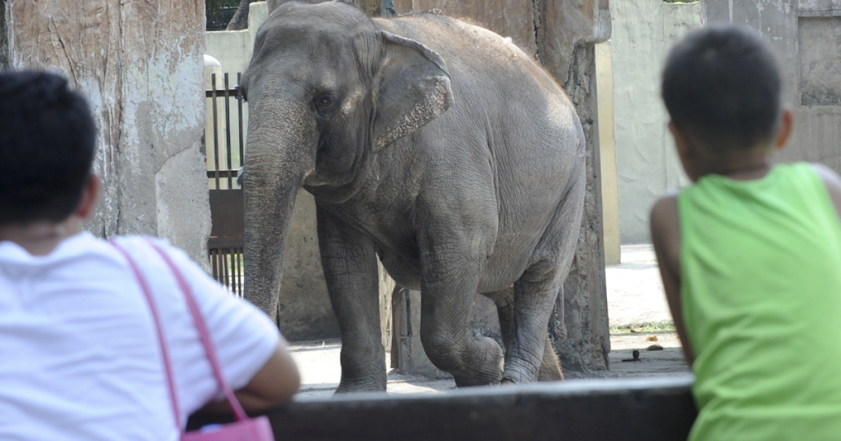 Children flock around the enclosure of 37-year-old elephant Mali at the Manila Zoo on May 10, 2012. Rock icon Morrissey called on Philippine President Benigno Aquino on May 10, ahead of a Manila concert, to send what the star described as Manila Zoo's long-suffering elephant into retirement.</p>