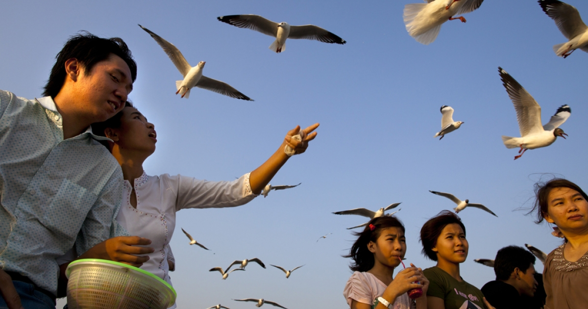 Burmese feed the seagulls at a jetty along the Yangon river ahead of the parliamentary elections on March 29, 2012, in Myanmar.</p>