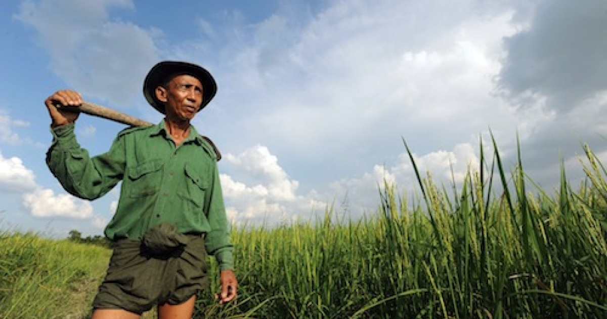 Myanmar farmer U Thein Hlaing, 62, poses in his paddy field on the outskirts of Yangon on October 24, 2011.</p>