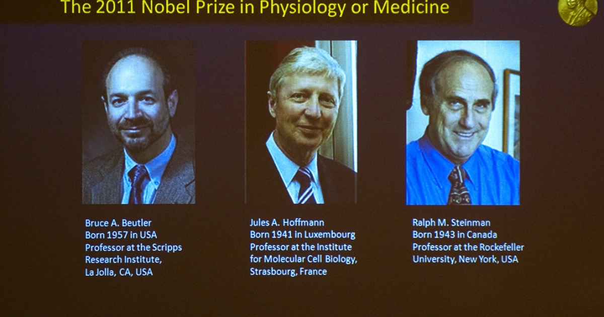 A picture shows a television screen at the Nobel Assembly at the Karolinska Institute in Stockholm announcing that (L-R) Bruce Beutler of the US, Frenchman Jules Hoffmann of France and Ralph Steinman of Canada had won the 2011 Nobel Prize in Physiology or Medicine.</p>