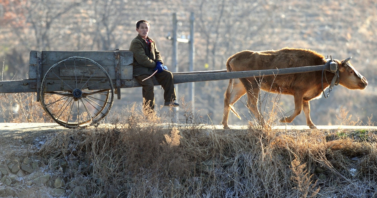 A North Korean farmer sits on a cart pulled by a cow near the banks of the Yalu River, north of the North Korean border town of Siniuju which lies across the river from Dandong in northeast China's Liaoning province on Nov. 26, 2010.</p>