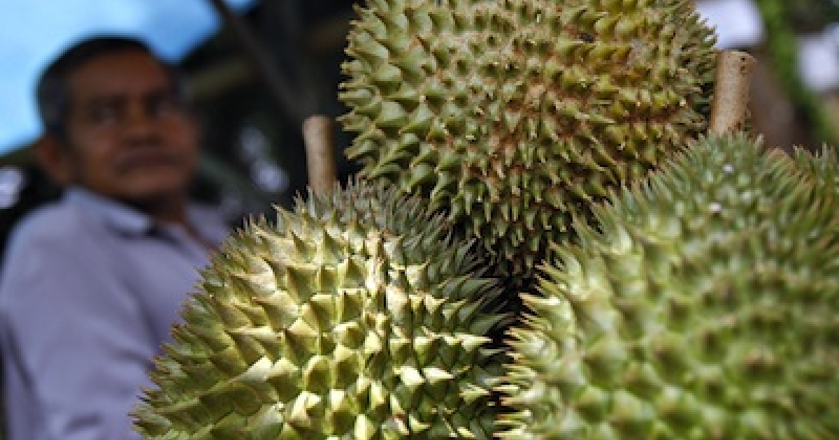Durian, a thorny tropical fruit with a distinctive pungent odor, sold at a roadside stall in Malaysia.</p>