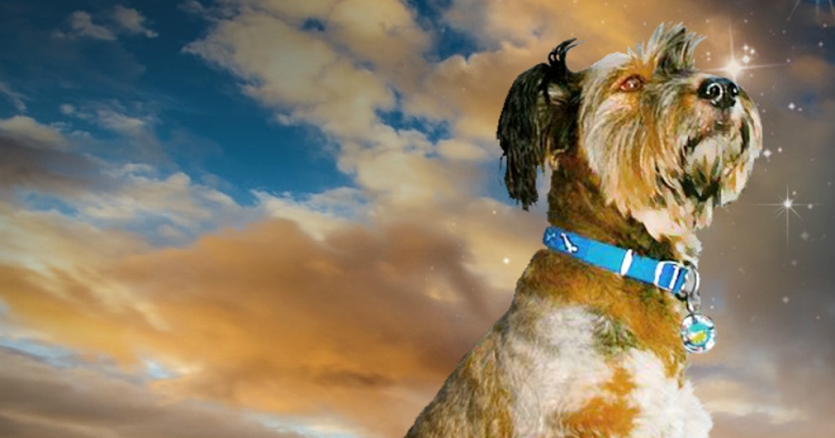 Oscar the globe-trotting pooch from South Africa has died in a tragic car accident.</p>
