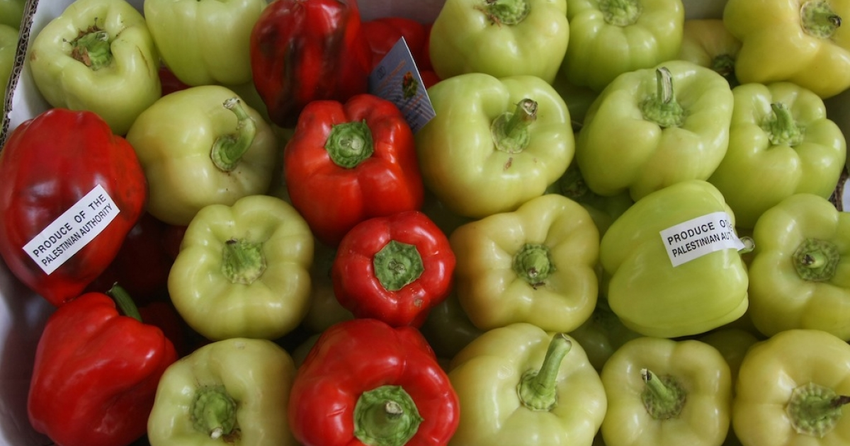 Yellow and Red peppers produced in Palestinian territories are displayed with