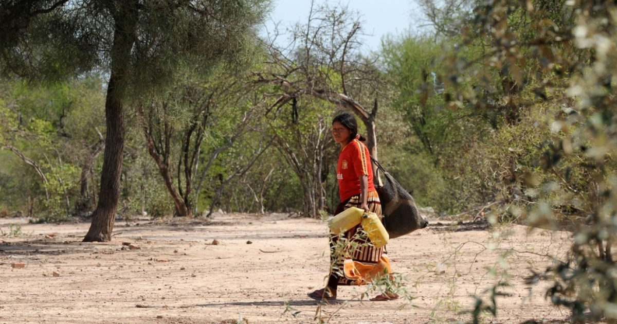 A woman goes in search of water in the Paraguayan Chaco region, on Nov. 19, 2009.</p>
