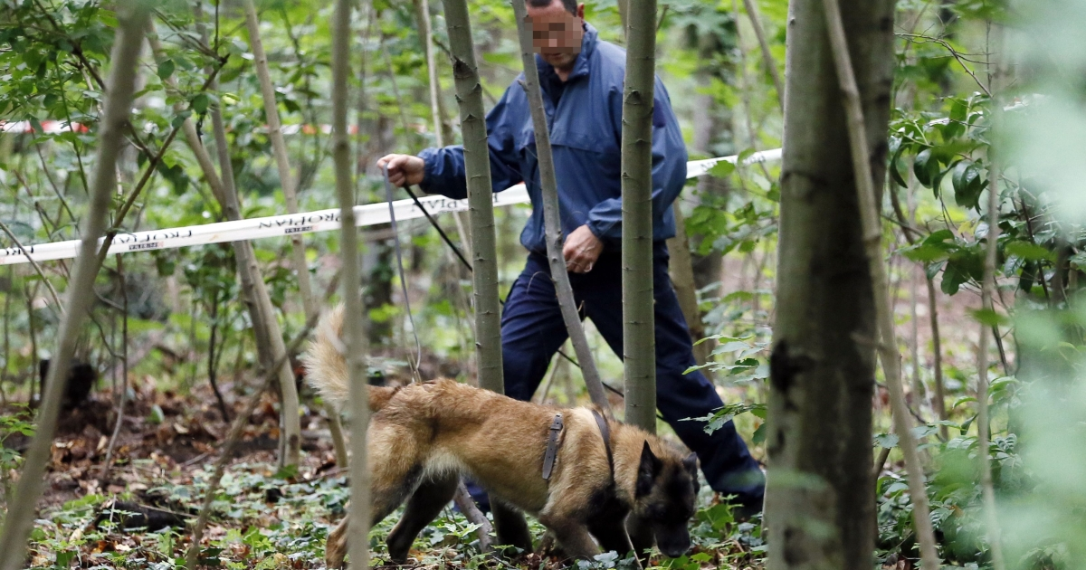 A French policeman carries out investigations with a police dog at the Bois de Vincennes in Paris on June 18, 2012 after a second human torso was discovered in the woods.</p>