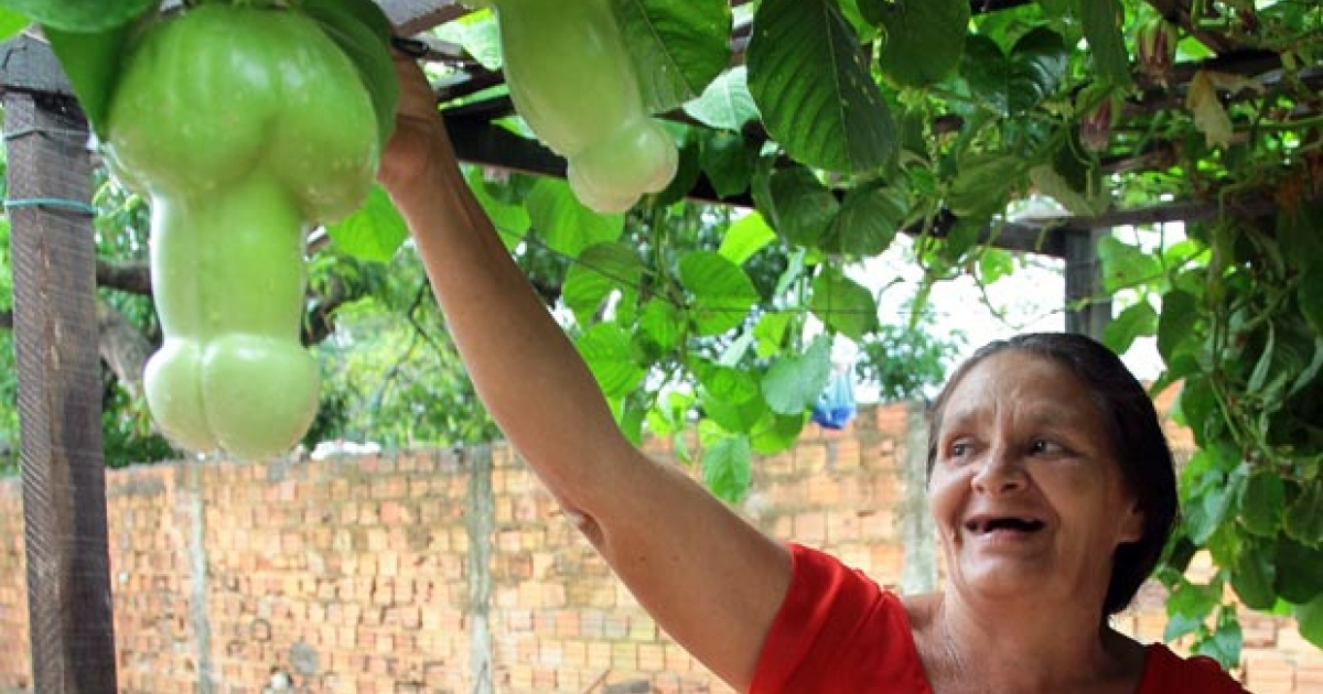 Brazilian gardener Maria Rodrigues de Aguiar Farias, 53, shows off penis-shaped passion fruit growing in her backyard.</p>
