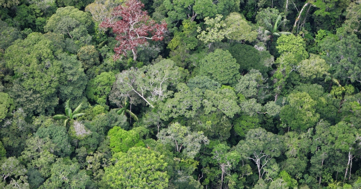 A helicopter went down Monday in the Peruvian Amazon.</p>