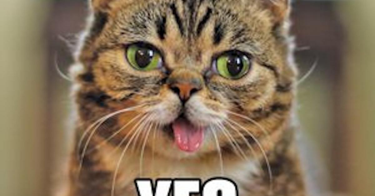 Meet Lil Bub, the Internet's new favorite cat.</p>