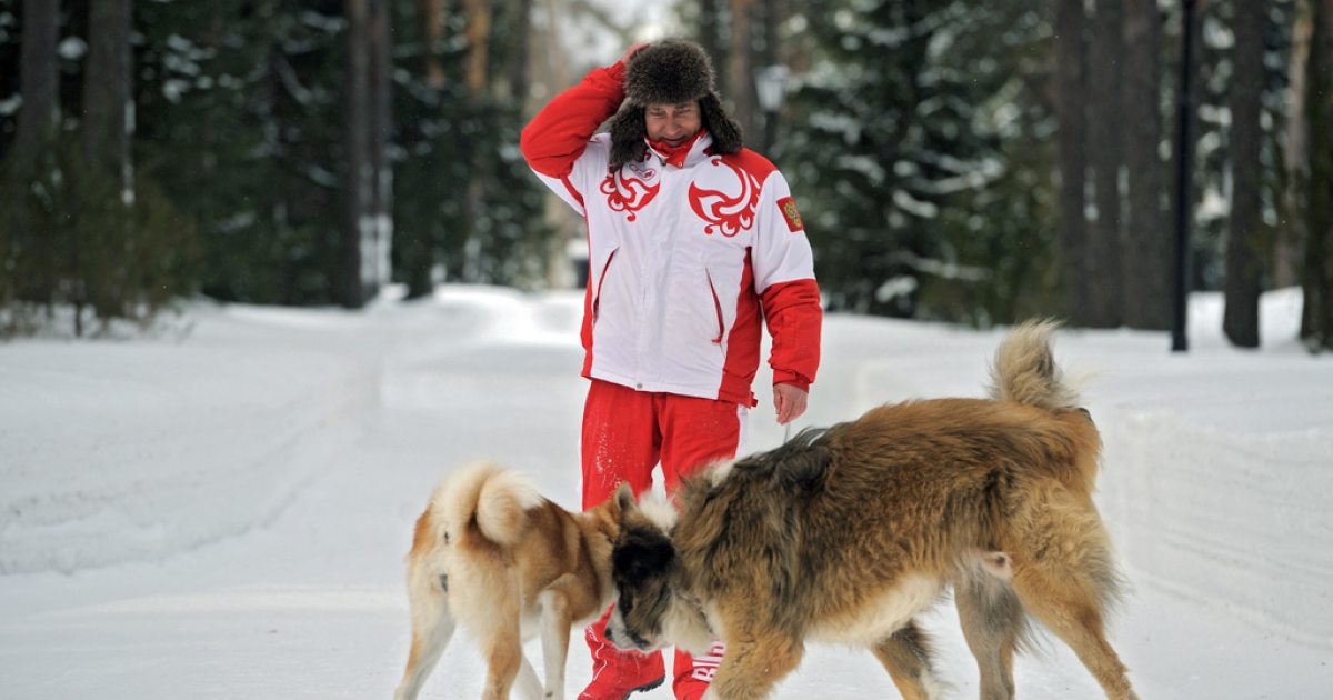 This photo, taken on March 24, 2013, shows Russin President Vladimir Putin as he plays with his dogs Buffy, right, and Yume at his residence in Novo-Ogariovo, outside Moscow. Buffy, a Bulgarian shepherd, was presented to Putin by his Bulgarian counterpart Boyko Borisov while Japanese Prime Minister Yoshihiko Noda offered Putin the puppy Yume as a gift during the G20 in Mexico in June.</p>