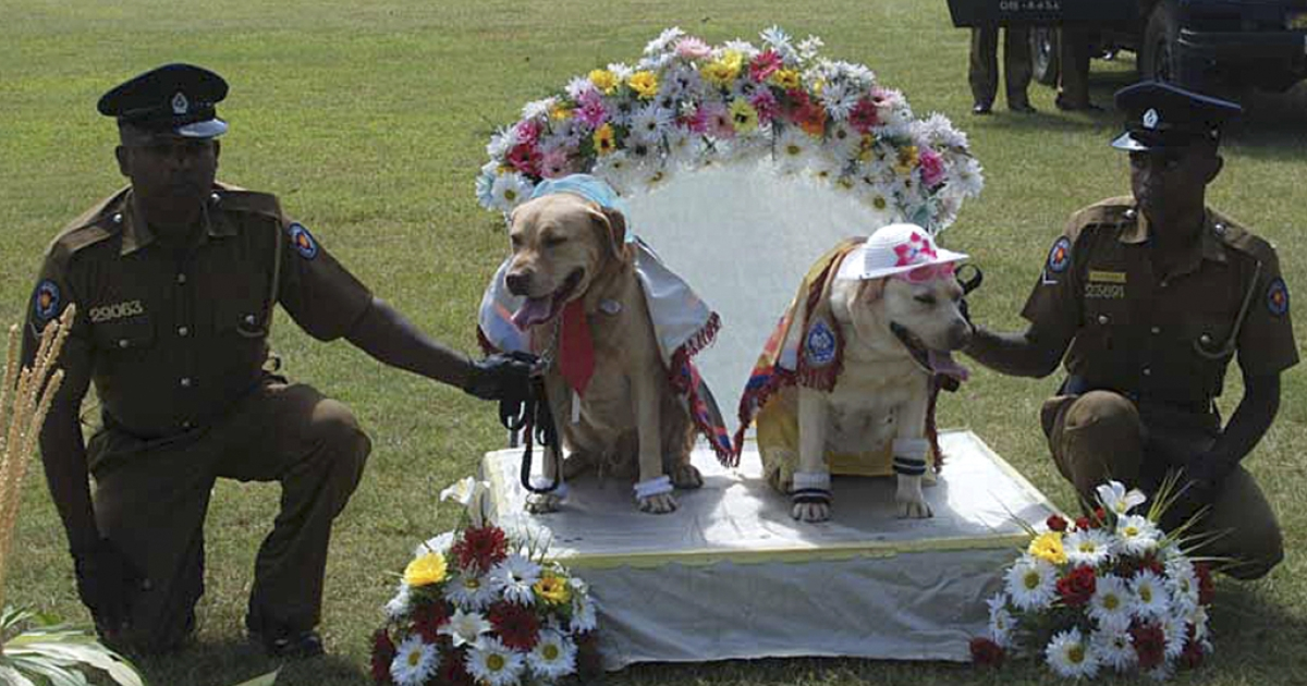 Sri Lankan police pose with sniffer dogs at a