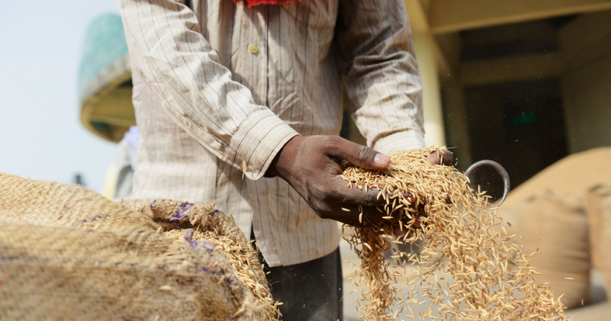 A laborer removes excess rice from a bag at a grains depot near New Delhi on August 27, 2013, one day after the Indian parliament passed a flagship 18-billion-dollar program to provide subsidized food to the poor that is intended to