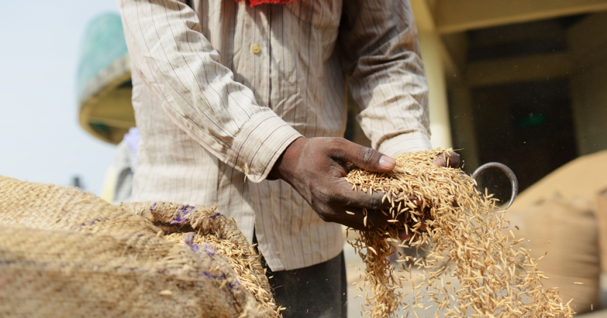 A low-wage earning Indian day laborer removes excess rice from a bag at a grains depot near New Delhi on August 27, 2013, one day after the Indian parliament passed a flagship $18 billion program to provide subsidized food to the poor that is intended to