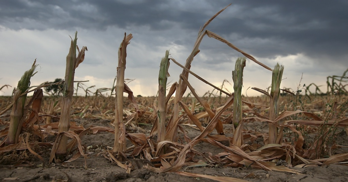 Crippling drought in the summer of 2012 left destroyed crops and starved cattle across America's heartland. In the last five years, weather across the country's breadbasket states has whipsawed between extremes. Not all farmers believe the mayhem represents evidence of a warming world, but many climate scientists do.</p>