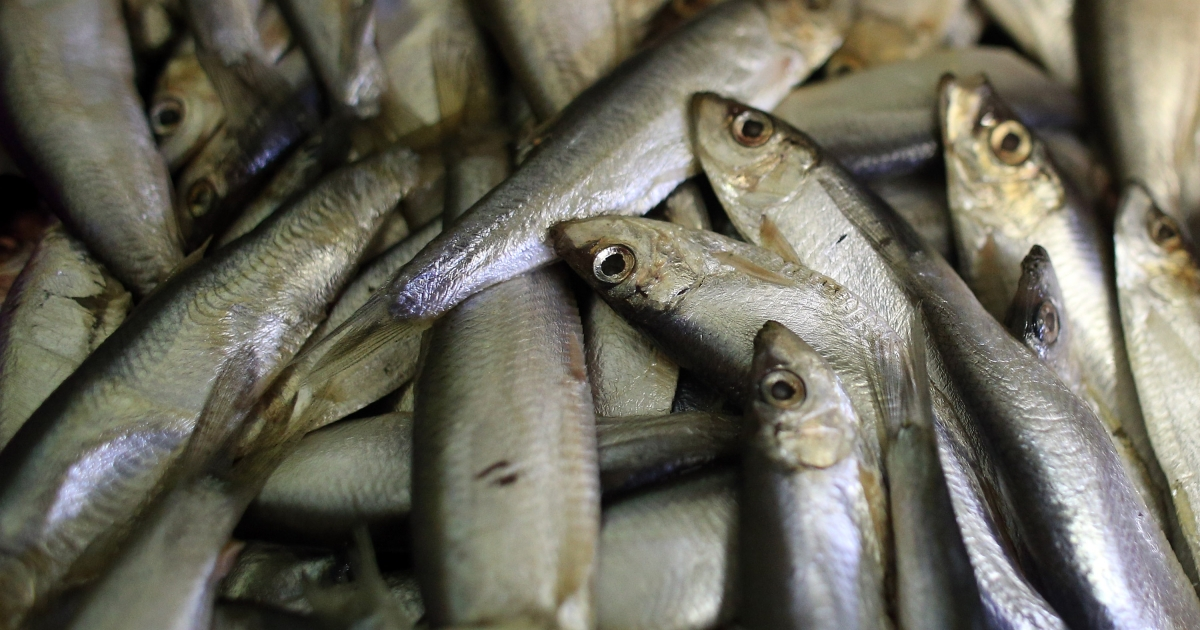 Traces of anxiety drugs showing up in waters around the world is affecting the behavior of fish.</p>